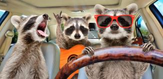 Philosophy in a Traffic Jam; Pondering Uncultured, Aggressive, Rude Behavior